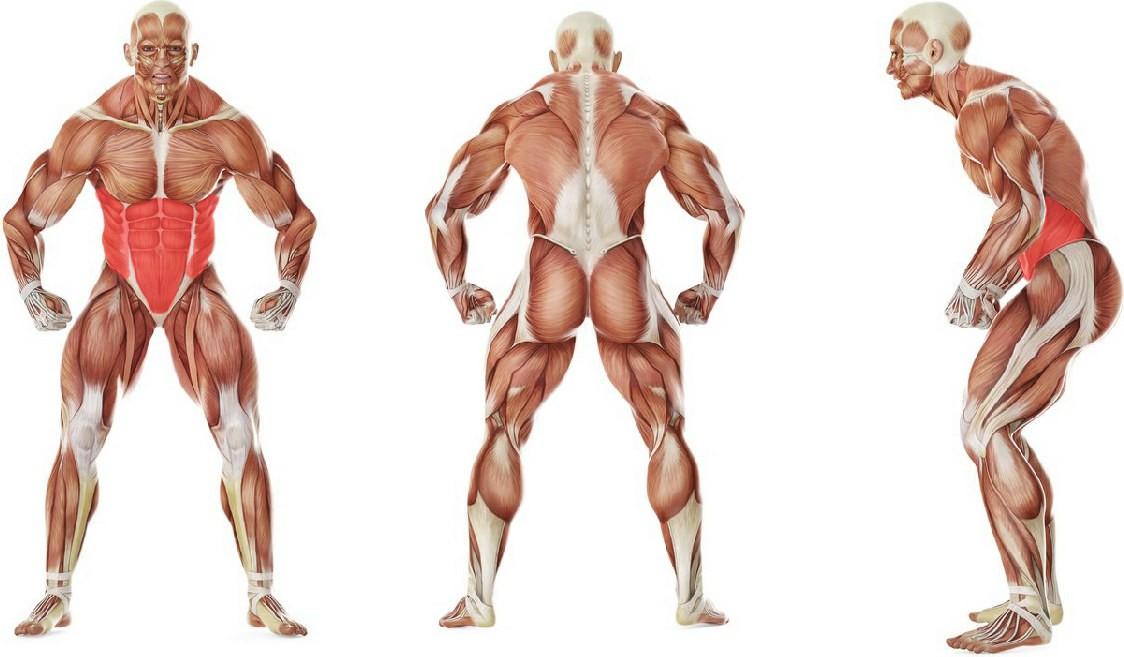 Какие мышцы работают в упражнении Обратное скручивание лежа на животе