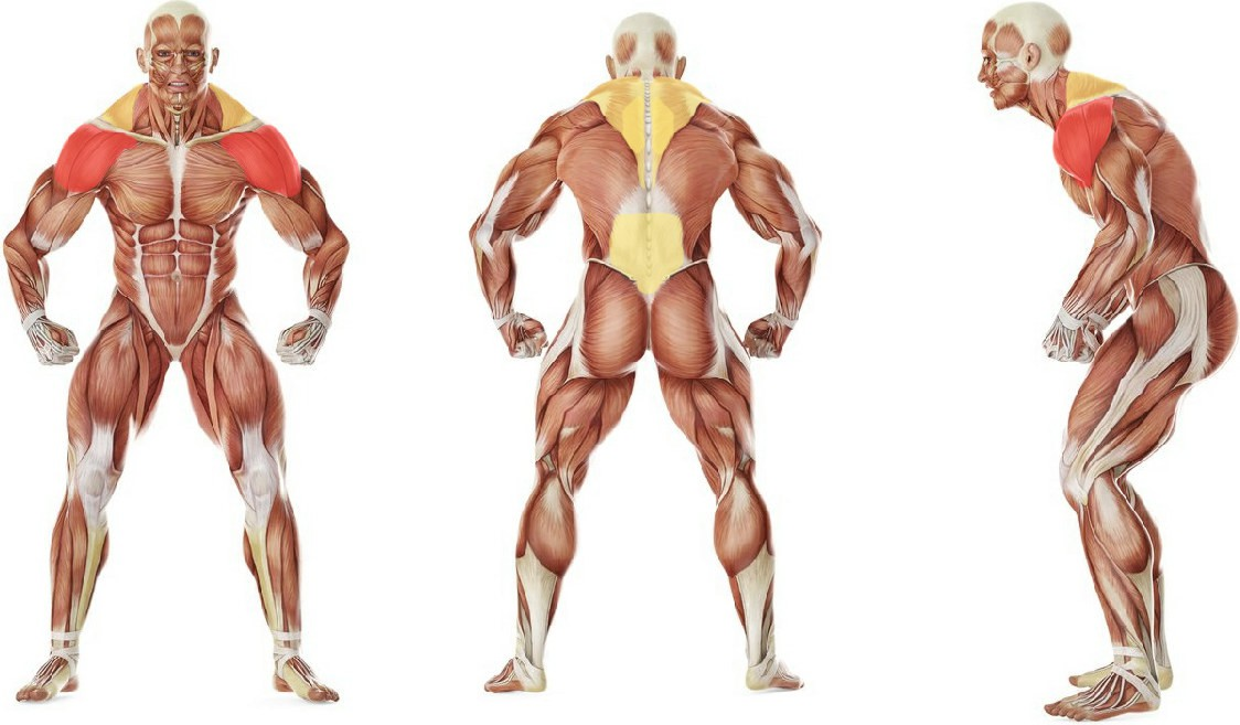 What muscles work in the exercise Bent Over Low-Pulley Side Lateral