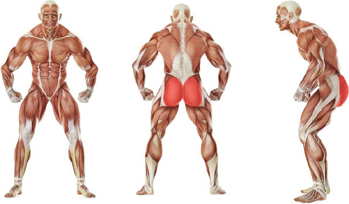 What muscles work in the exercise Leg side abduction with a rubber band