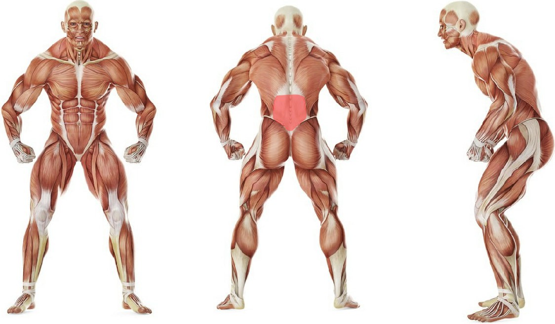 What muscles work in the exercise Hyperextensions (Back Extensions)