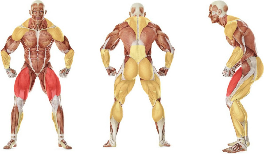 What muscles work in the exercise Hang Clean