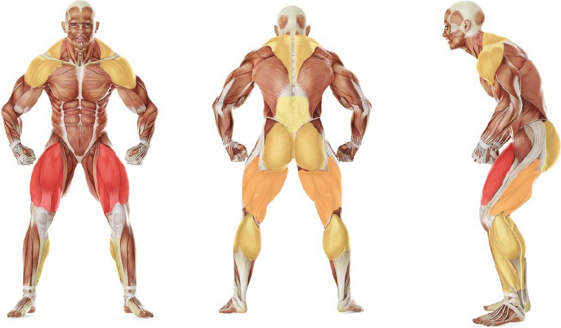 What muscles work in the exercise Power Clean from Blocks