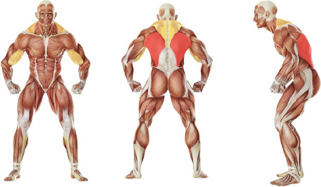 Какие мышцы работают в упражнении Подтягивания от Винса Жиронды