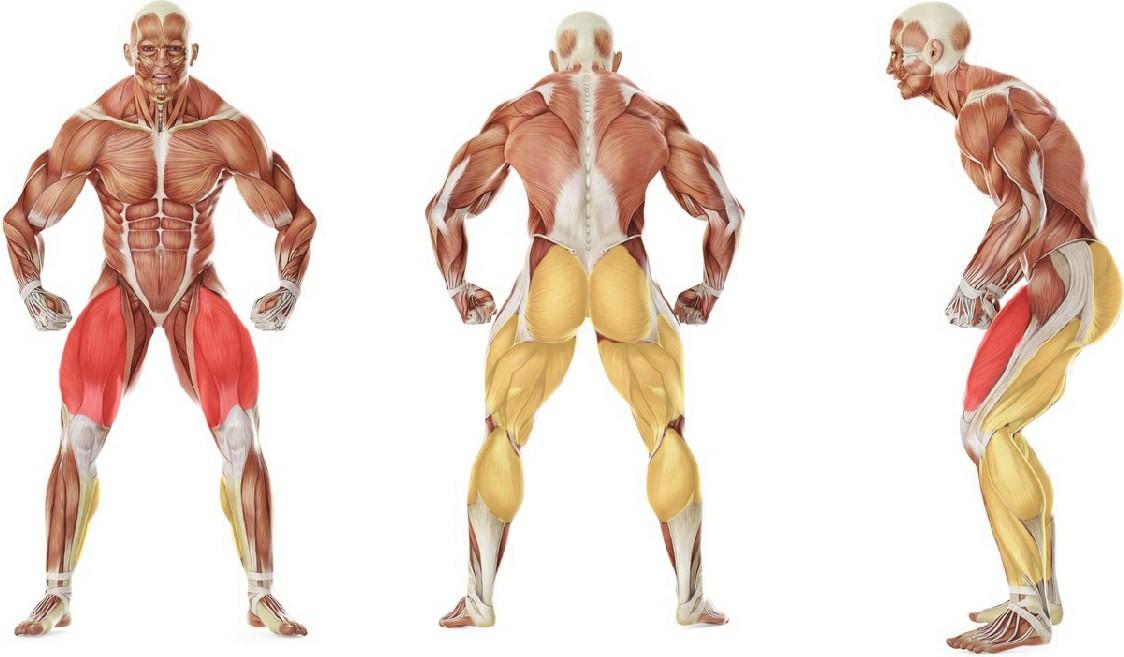 Какие мышцы работают в упражнении Выпады назад с гантелями (обратные выпады)