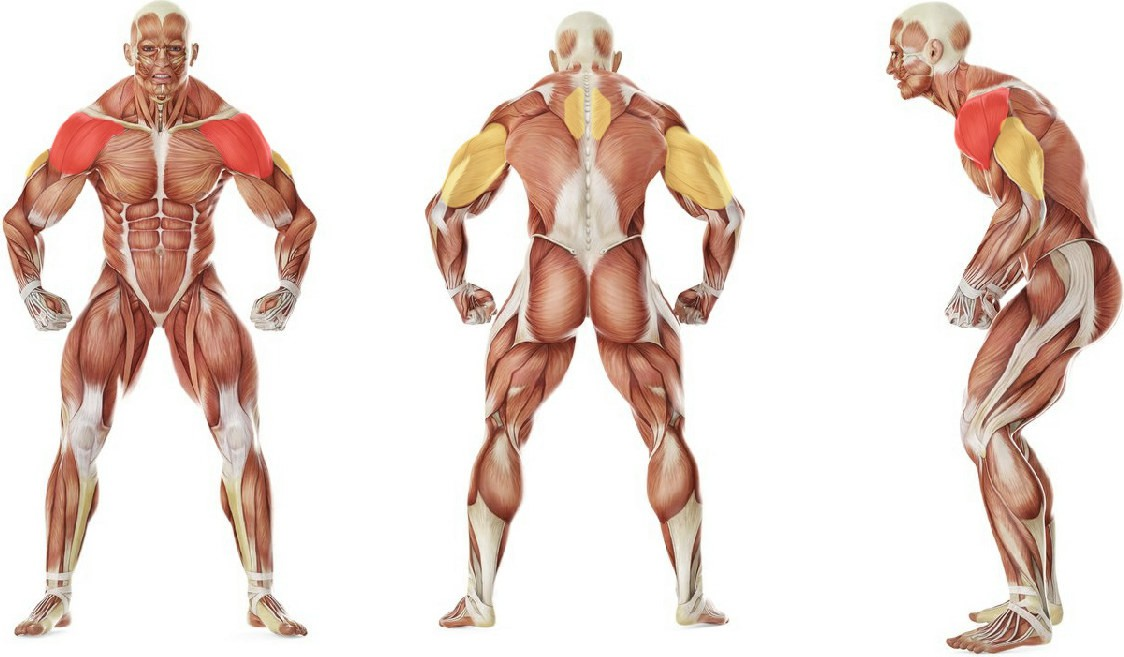 What muscles work in the exercise Standing Military Press