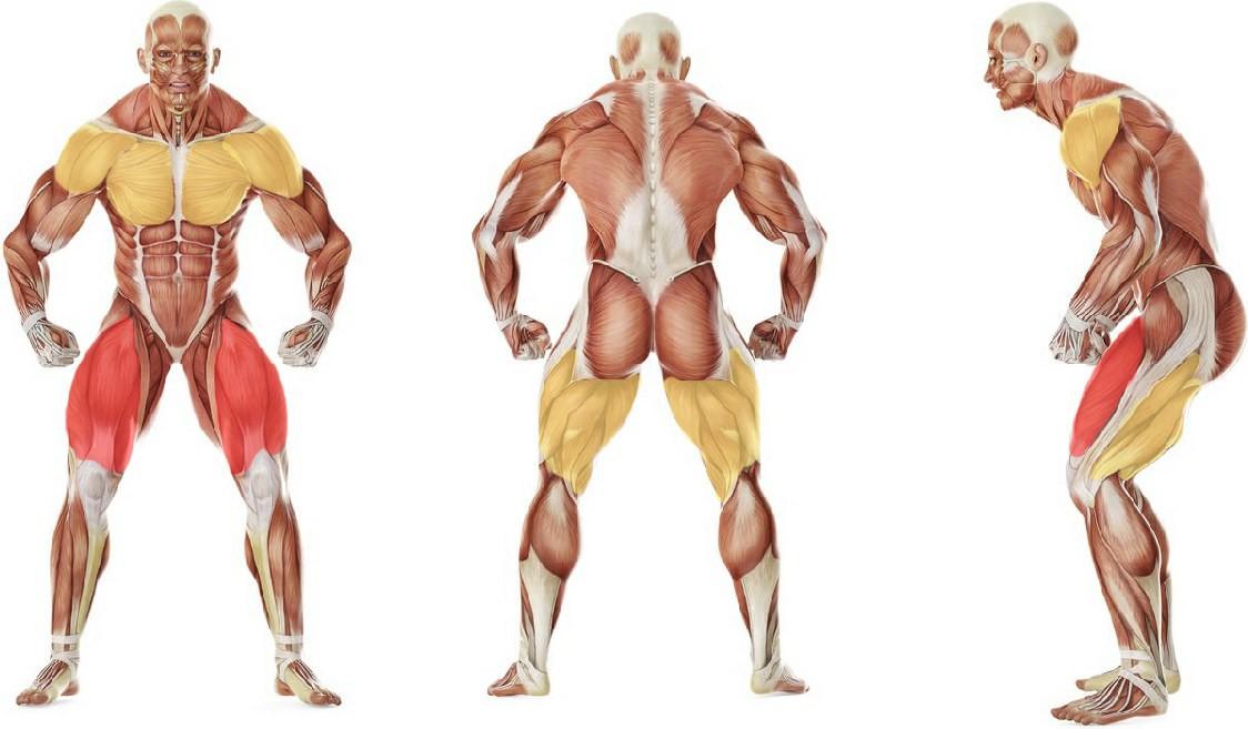 Какие мышцы работают в упражнении Растяжка альпиниста