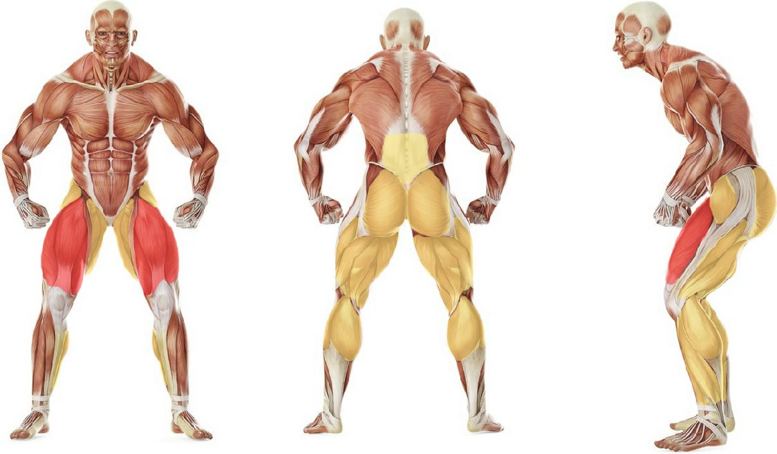 Какие мышцы работают в упражнении Приседания с эспандером