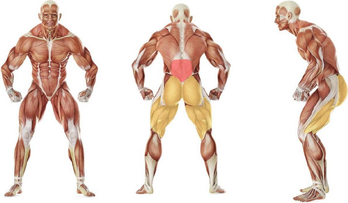 Какие мышцы работают в упражнении Гиперэкстензия с напарником