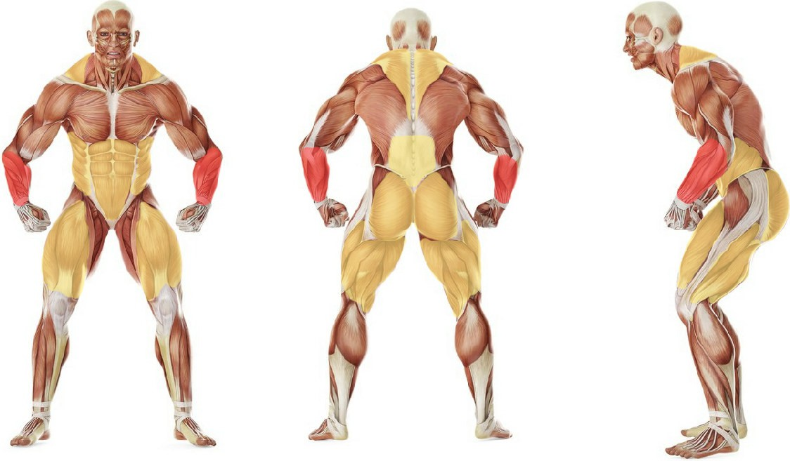What muscles work in the exercise Прогулка фермера