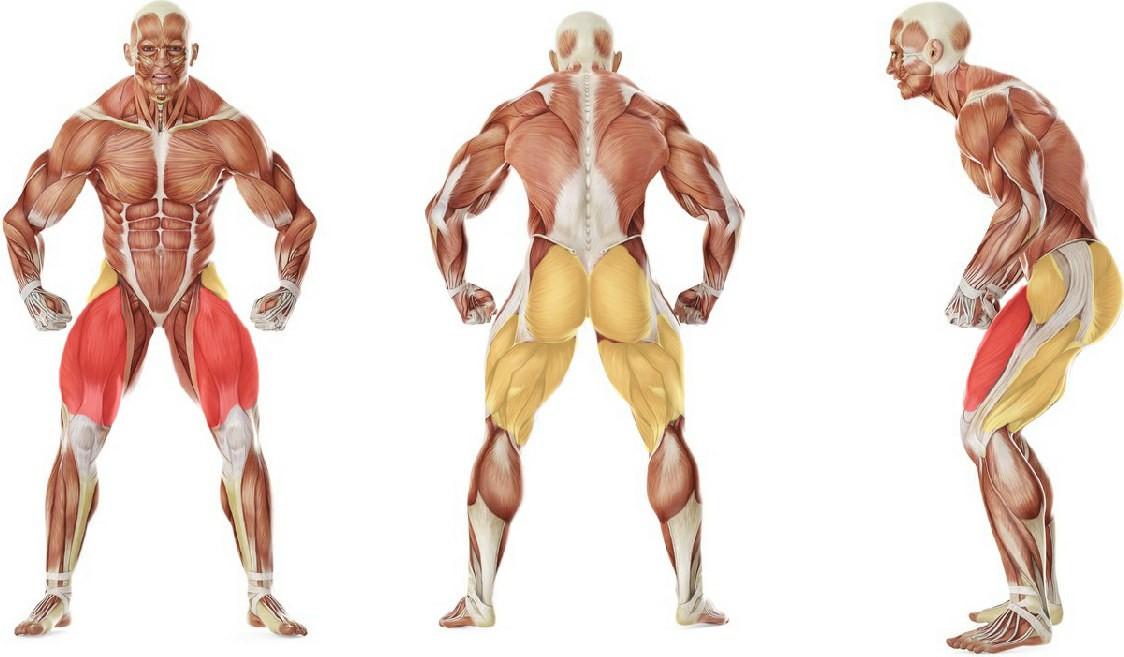 Какие мышцы работают в упражнении Растяжка с приседанием