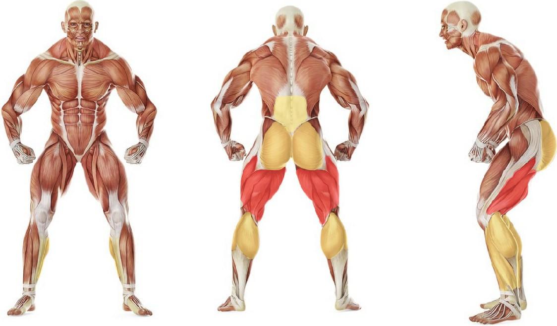 Какие мышцы работают в упражнении Румынская становая тяга