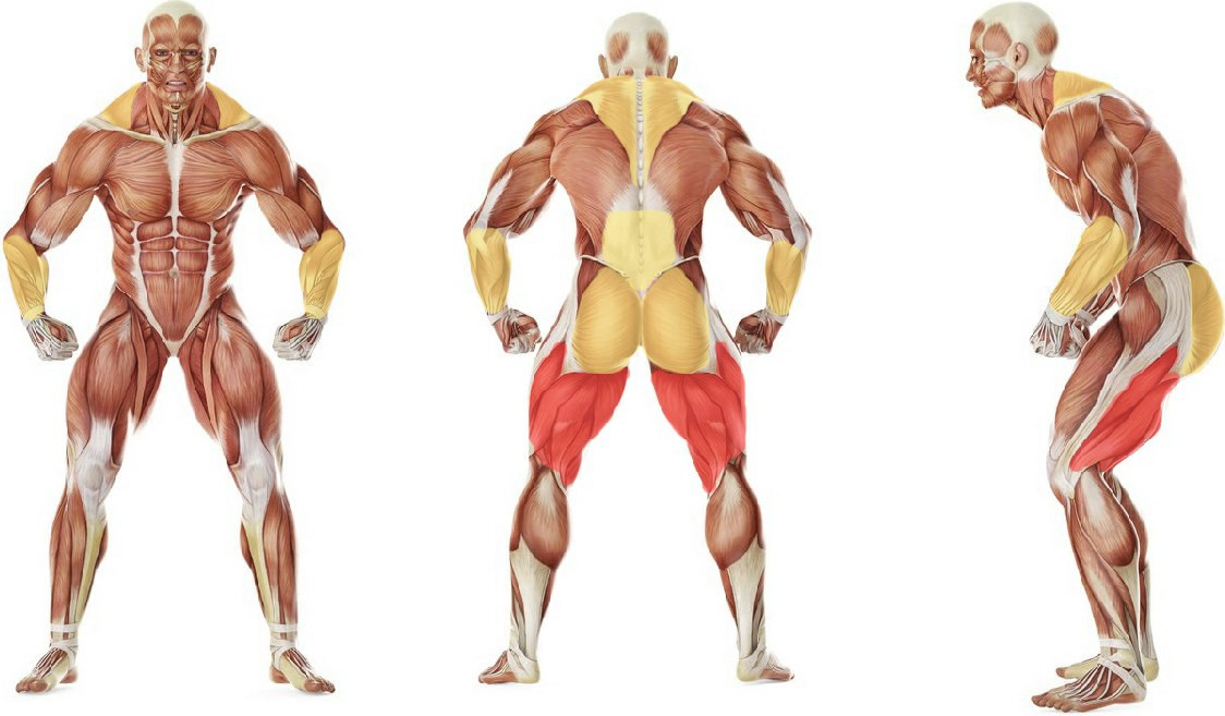 What muscles work in the exercise Romanian Deadlift from Deficit