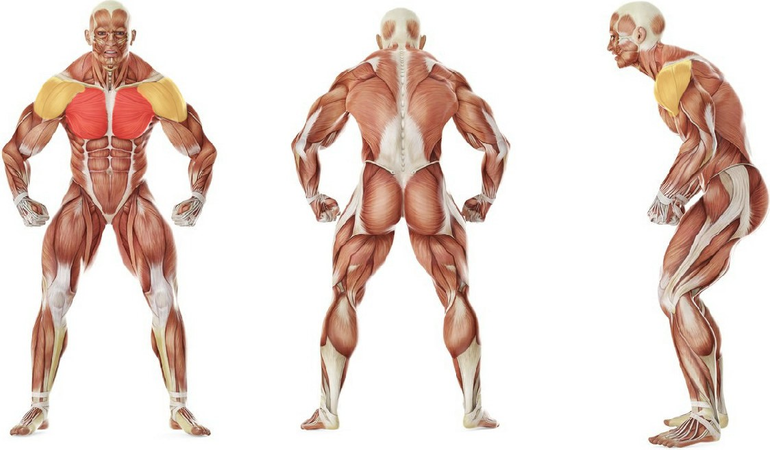 What muscles work in the exercise Incline Dumbbell Flyes
