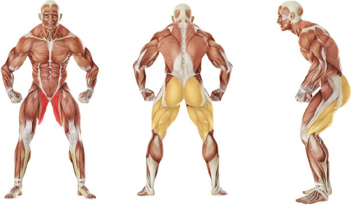 What muscles work in the exercise Thigh Adductor