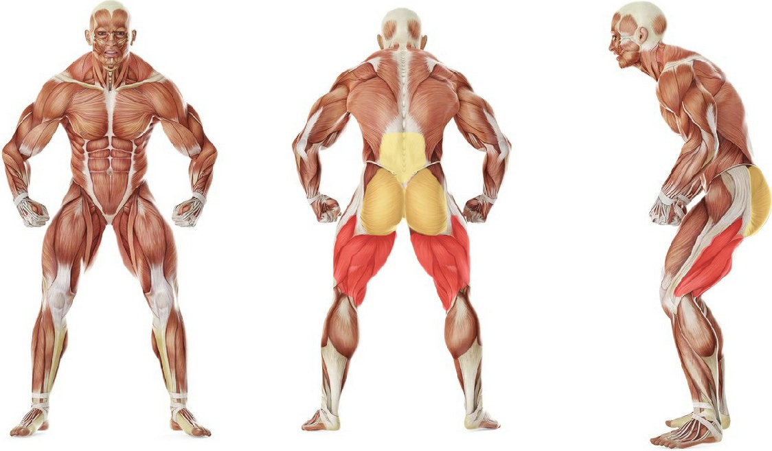 What muscles work in the exercise Stiff-Legged Dumbbell Deadlift