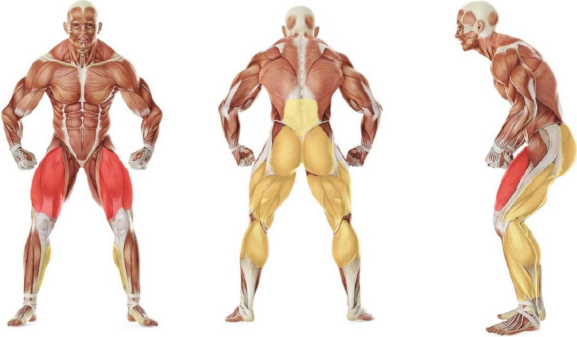 Какие мышцы работают в упражнении Приседания со штангой с широкой постановкой стоп