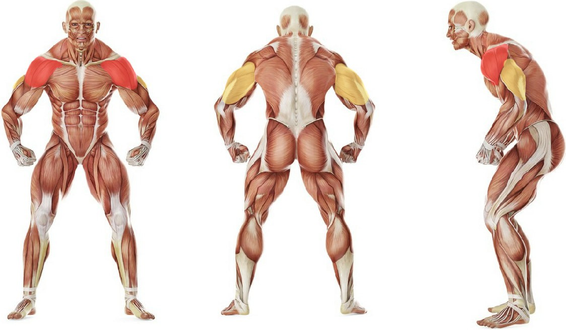 What muscles work in the exercise Standing Barbell Press Behind Neck