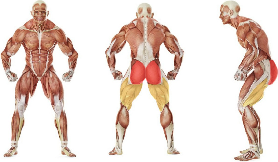 What muscles work in the exercise One-Legged Cable Kickback