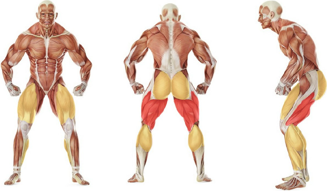 What muscles work in the exercise Split Squats