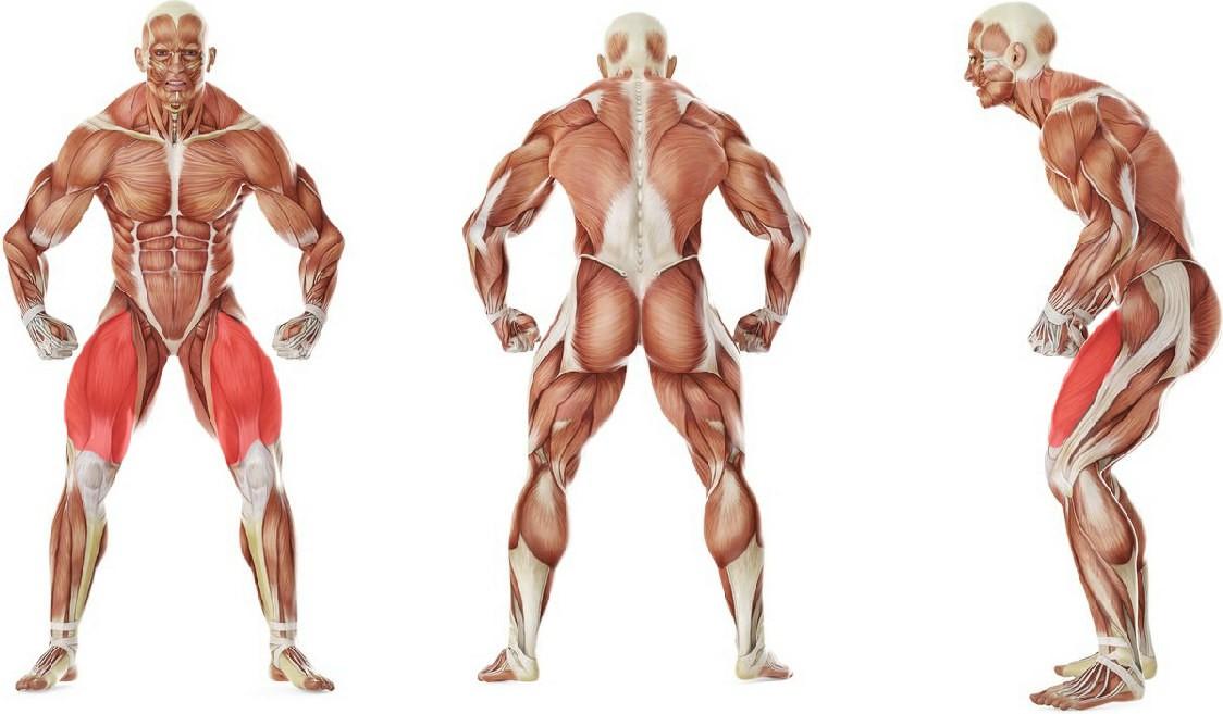 Какие мышцы работают в упражнении Растяжка квадрицепсов с отгибанием назад