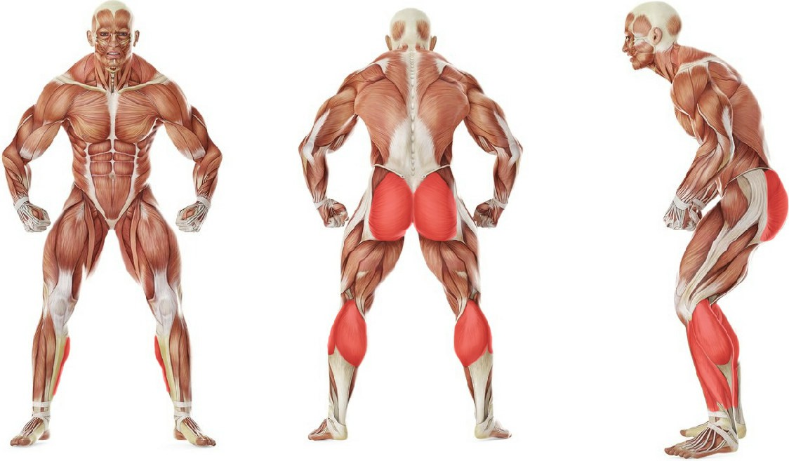 Какие мышцы работают в упражнении Прыжки с махом рук