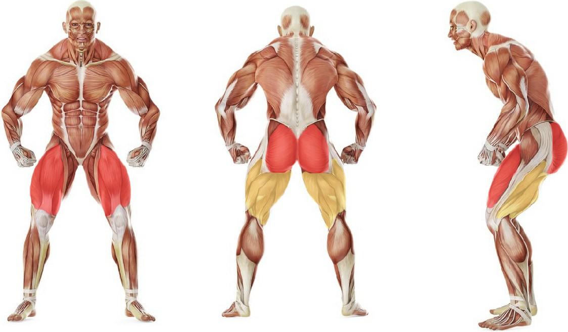 Какие мышцы работают в упражнении Статический присед у стены
