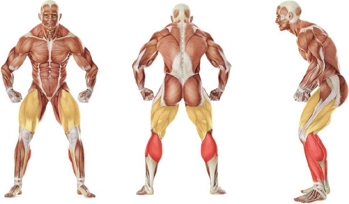 Какие мышцы работают в упражнении Бег на месте с высоким подниманием бедра