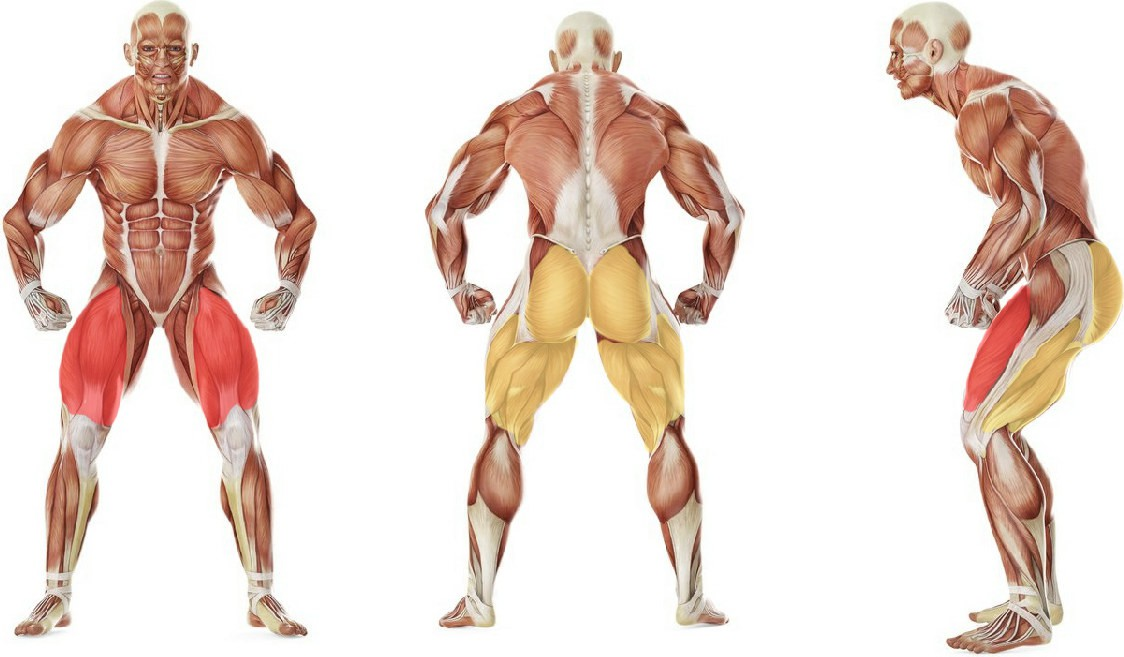 What muscles work in the exercise Выпады