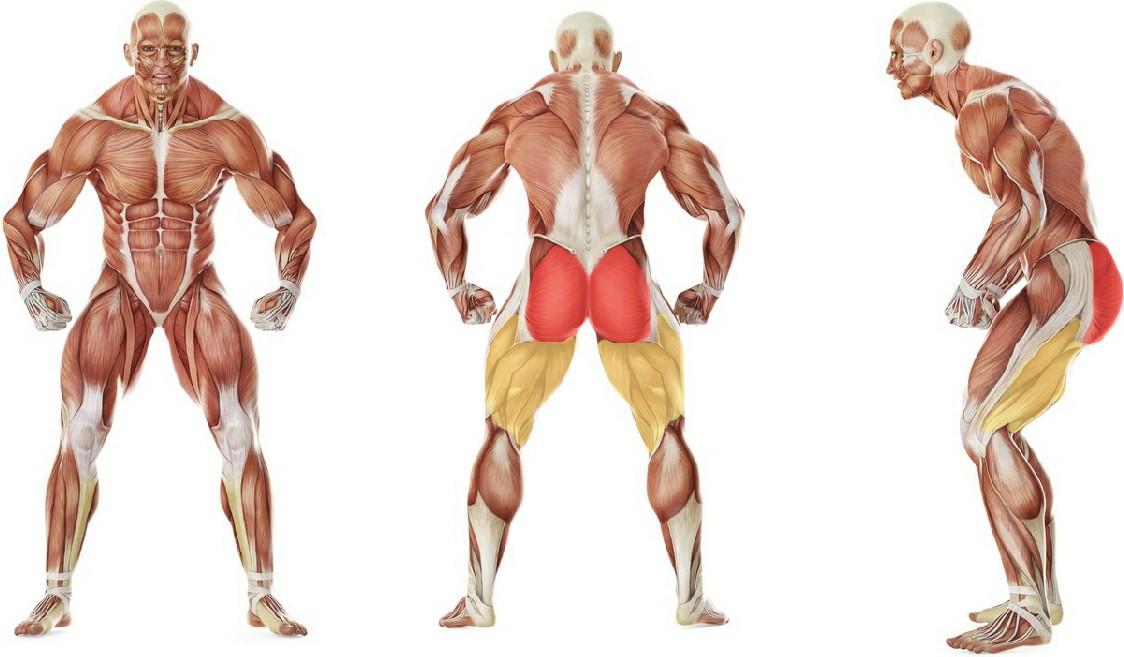 Какие мышцы работают в упражнении Махи назад согнутой ногой